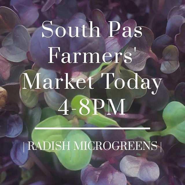 You read right! We're now at South Pasadena Farmers' Market Thursdays from 4-8. We'll have microgreens, limes, rosemary and basil for you today! @southpasfarmersmarket . . . . . #produce #farmersmarket #farmlife #southpasadena #thursday #greens #greensmoothie #veggies #organic #organicfarming #urbanfarming #urbanag #foodstyling #foodasmedicine #foodporn #foodie #restaurant #microgreens
