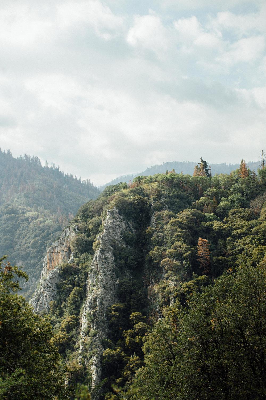 Sequoia-1-11.jpg