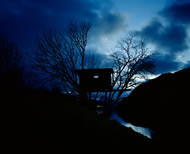 Within the trees – Série Parallel Landscapes © Astrid Kruse Jensen