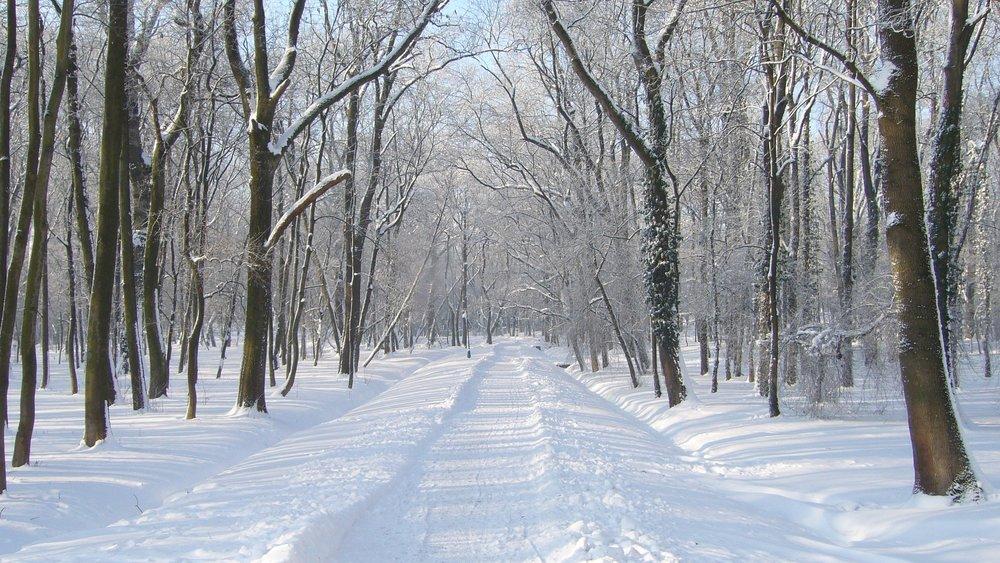 winter-3181419_1920 (1).jpg