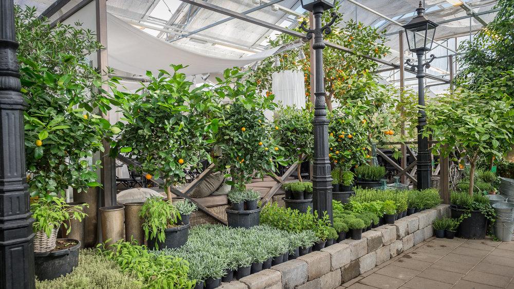 Åsbyhemochträdgård-miljö växter.jpg