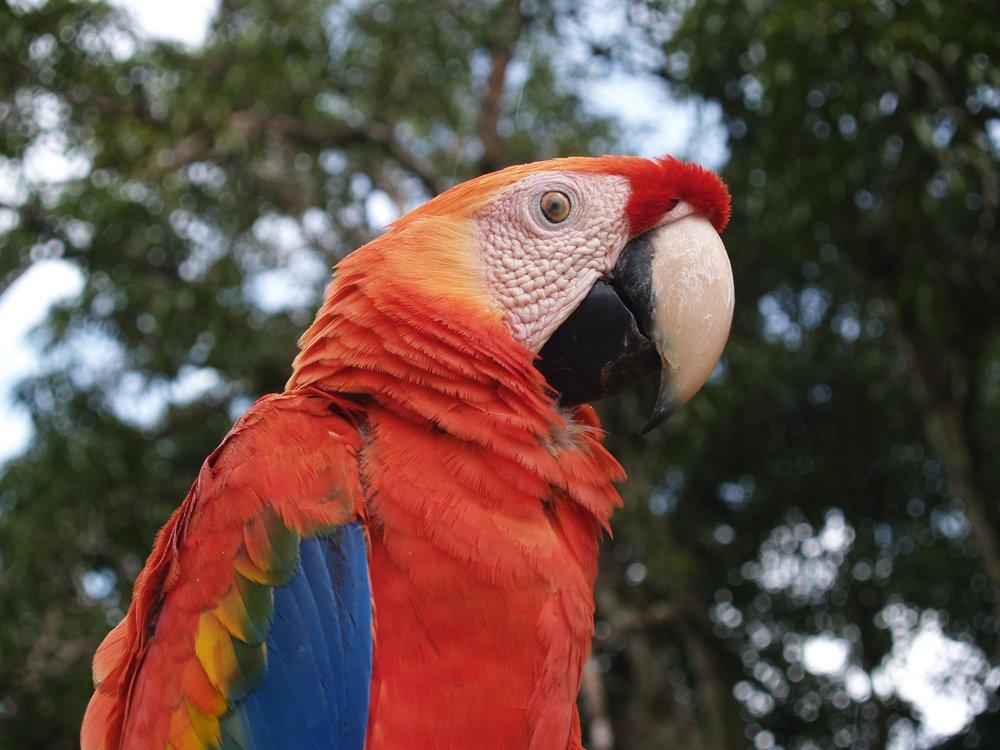 papegaai.JPG