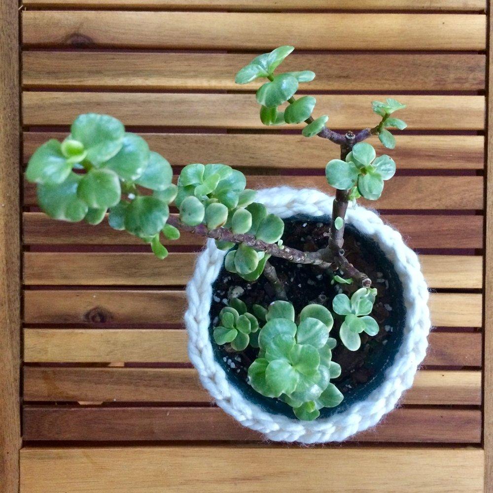 Crochet Pattern Basket Plant Cozie.jpg