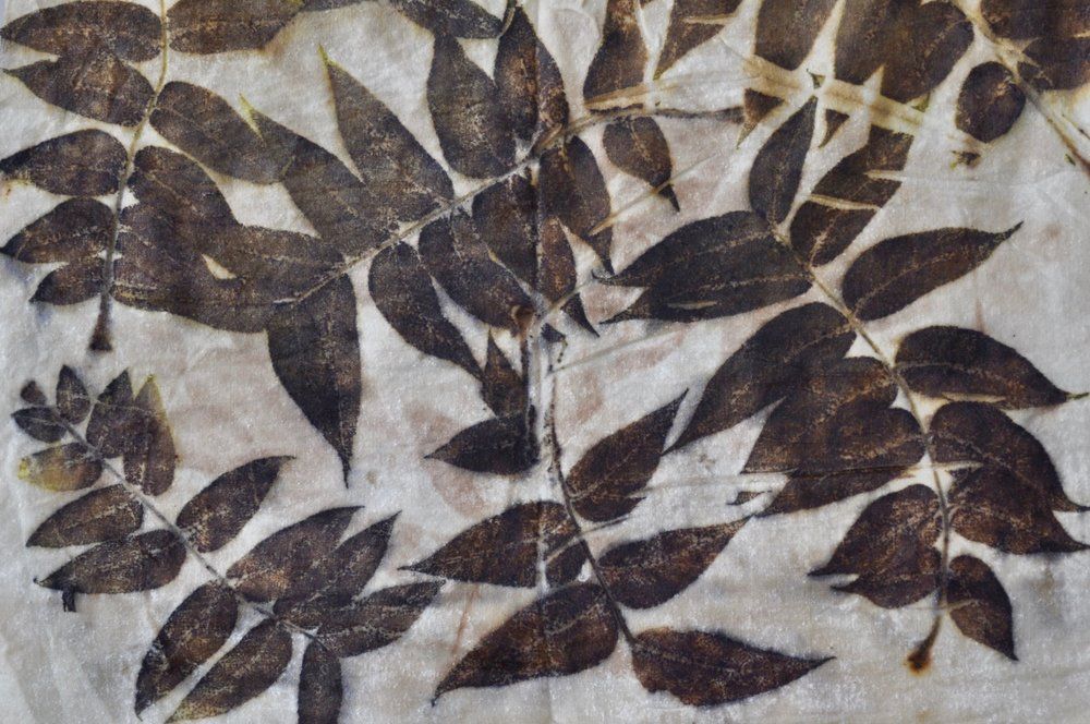 eco printing black walnut leaves