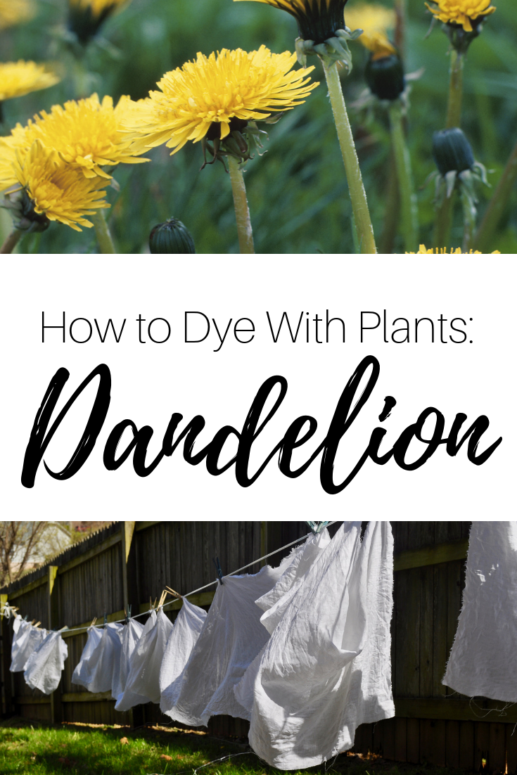 how to dye with plants dandelion natural dye.jpg