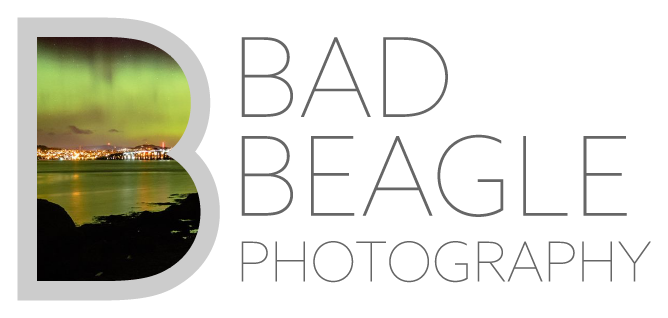 Bad Beagle! Photography