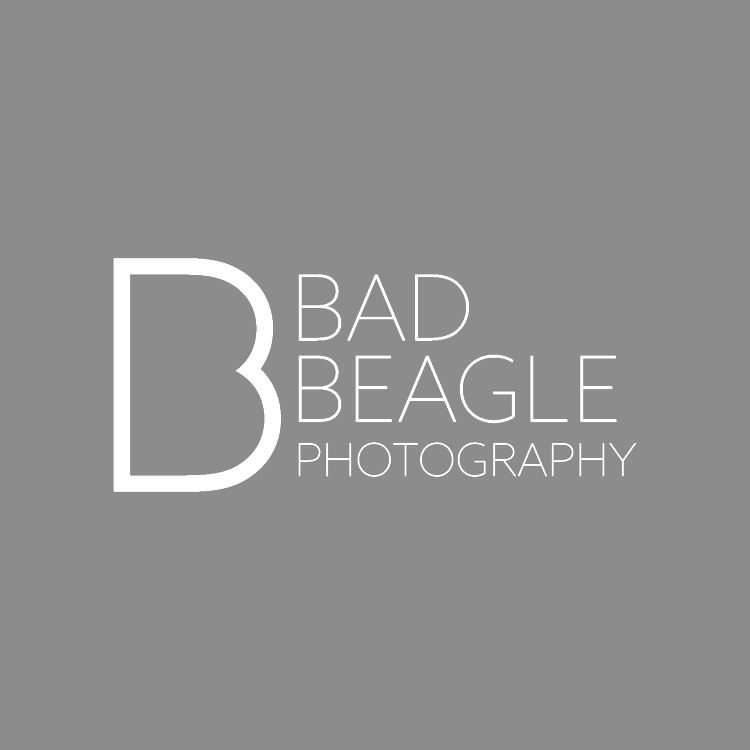 Bad Beagle Photography
