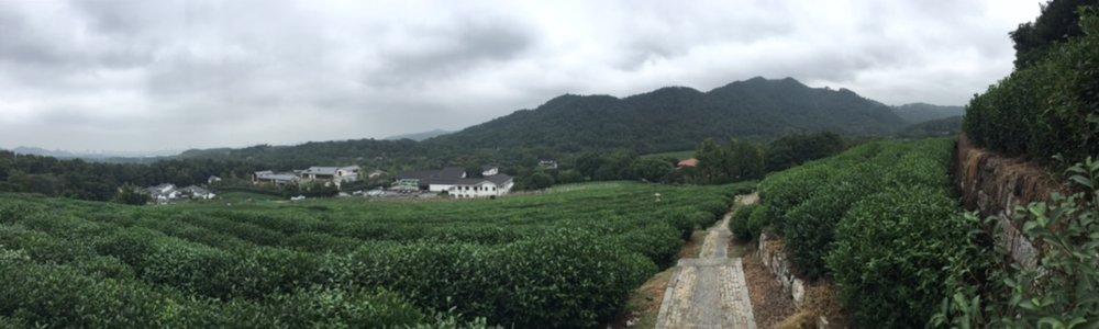 National Tea Museum