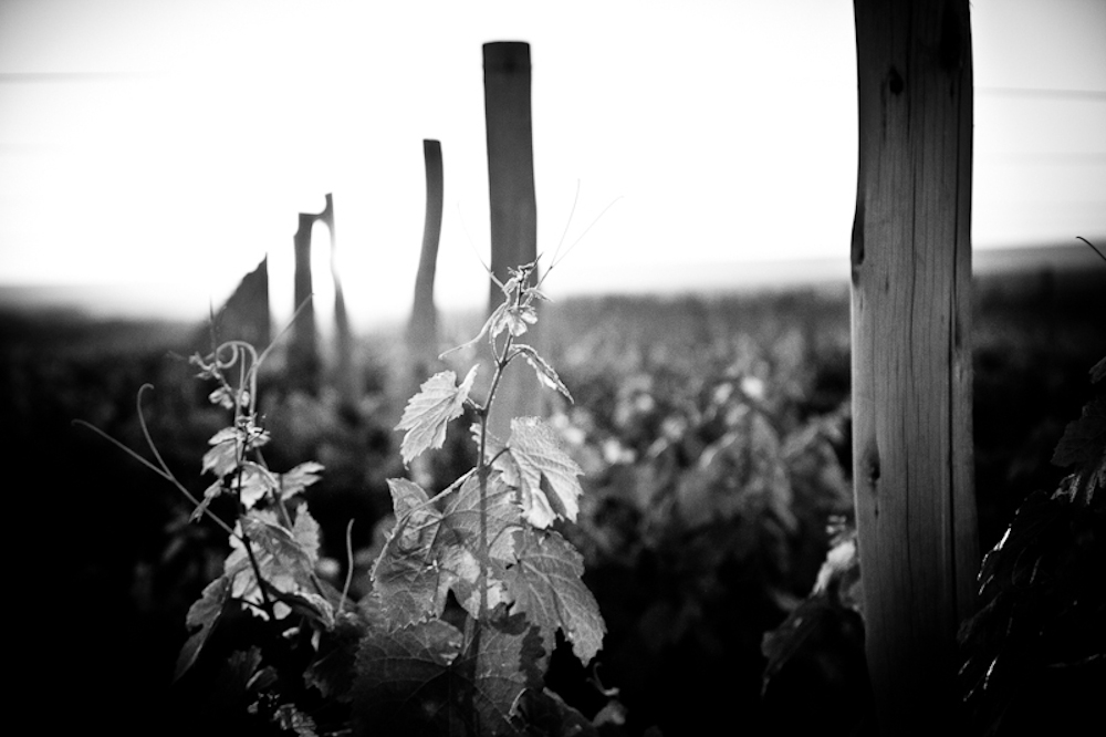 wine_edits-5.jpg
