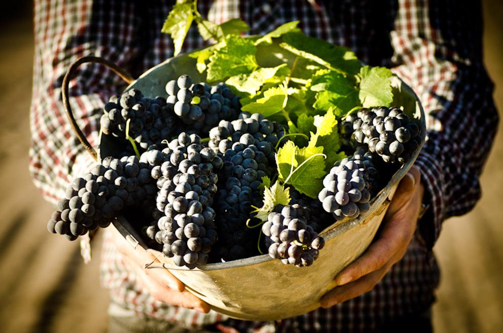 wine_edits-10.jpg