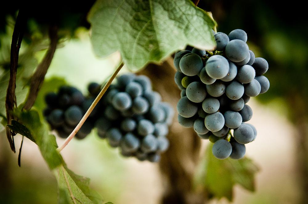 wine_edits-35.jpg
