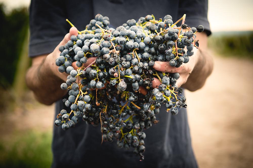 wine_edits-60.jpg