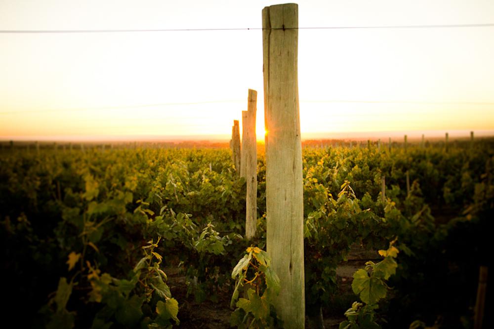 wine_edits-4.jpg