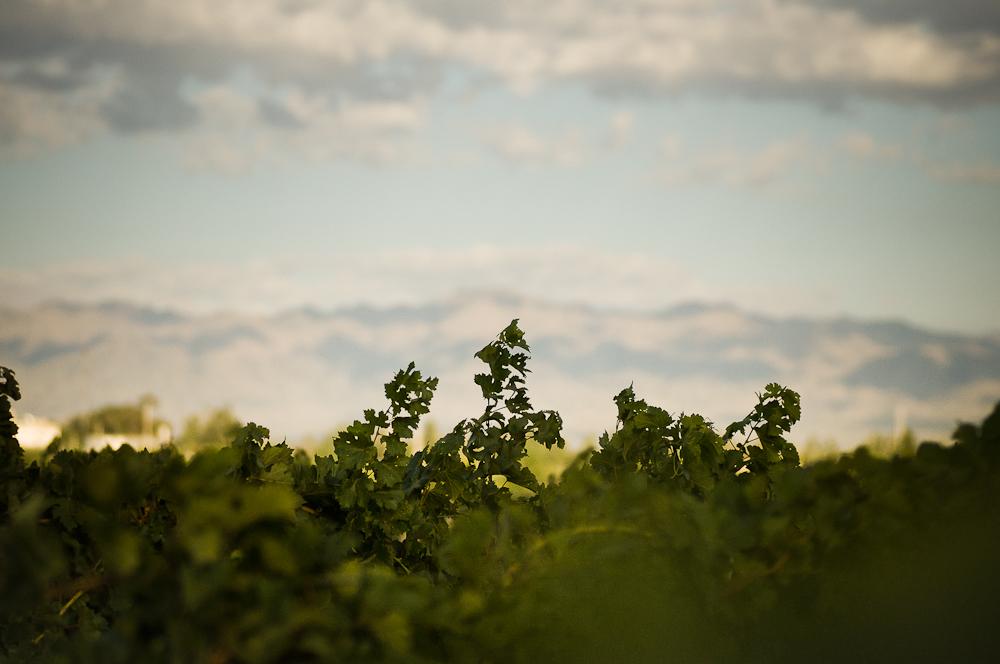 wine_edits-29.jpg