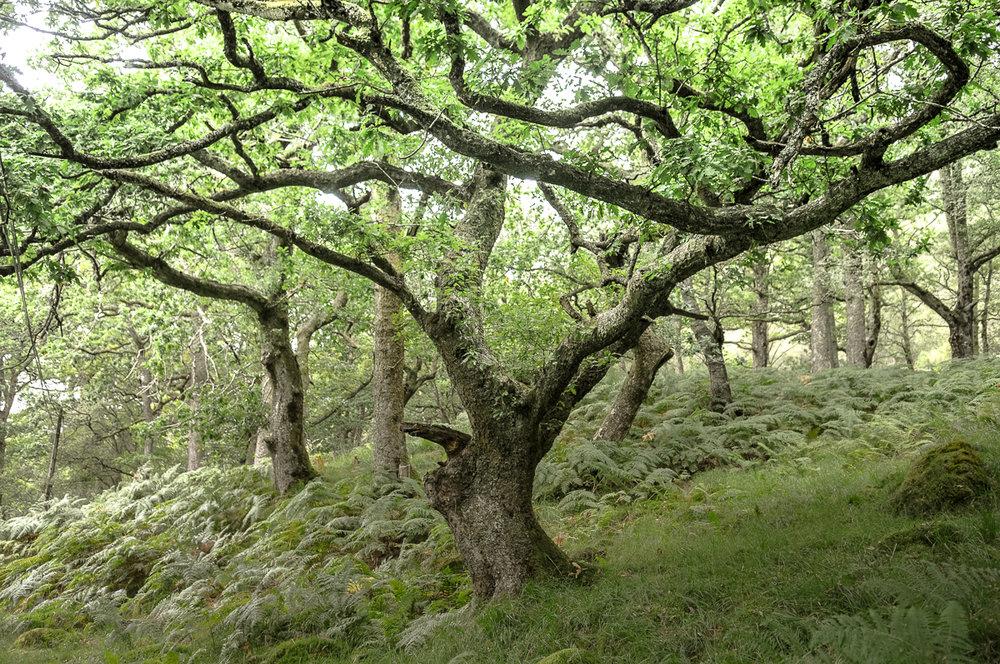 forest_scotland_jocelynmandryk