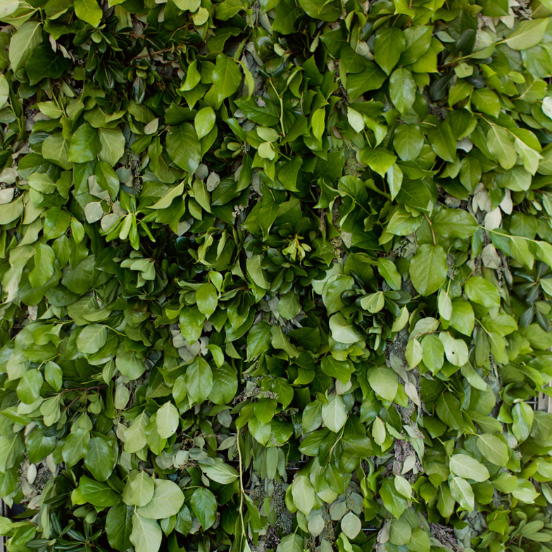 Tanger Outlet Event Wall Covered in Green Leaves