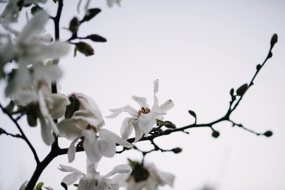 engle-olson-photography-spring-in-minneapolis-13.jpg