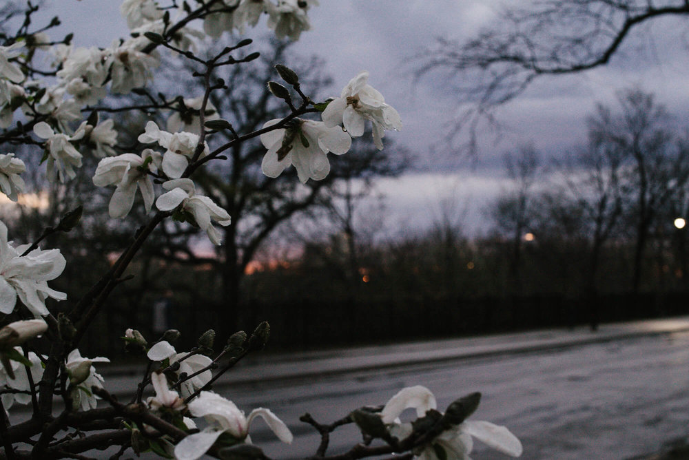 engle-olson-photography-spring-in-minneapolis-14.jpg