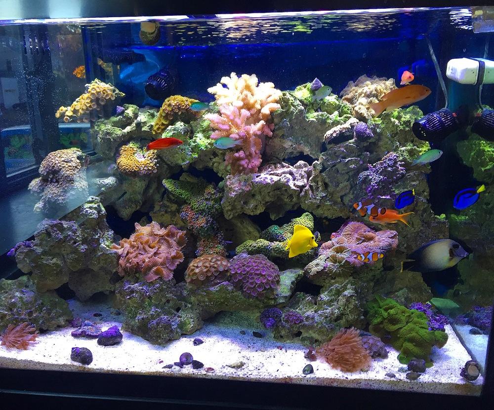 Salt water anderson aquariums for Saltwater fish online