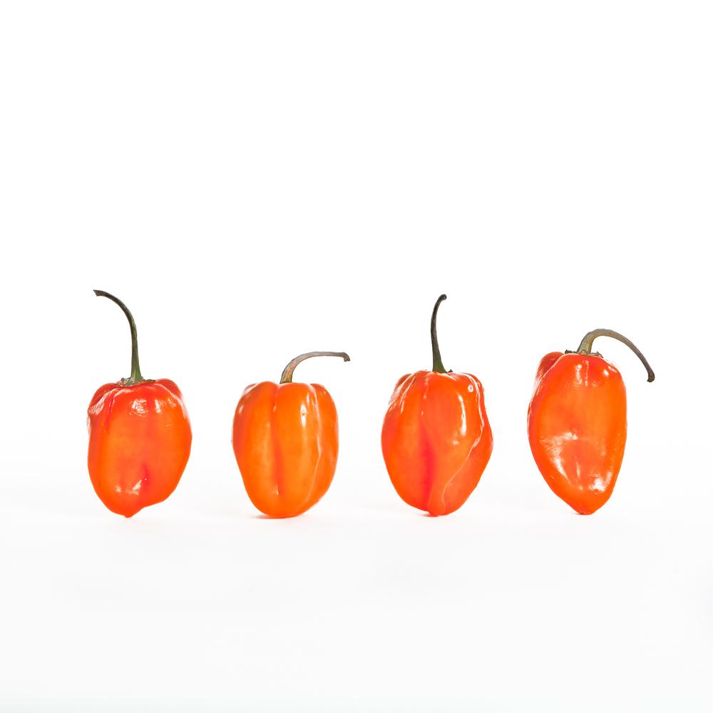 Pepper Final -6.jpg