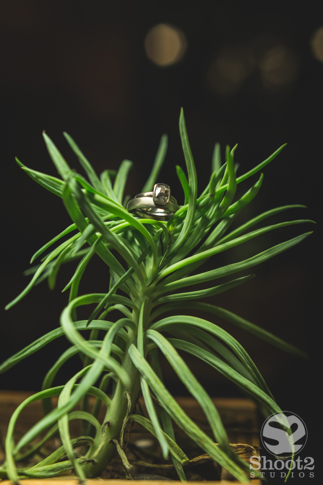 wedding rings on plants