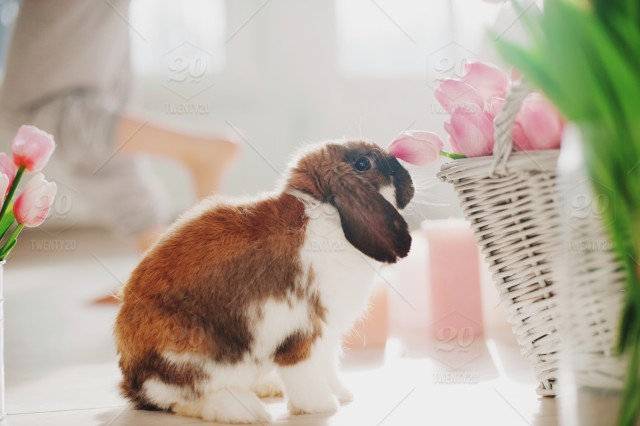 stock-photo-rabbit-spring-easter-bunny-rabbit-ears-easter-eggs-baby-bunny-easter-bunny-bunny-rabbit-bbf8e095-a1b9-4484-87da-5ca07f680ae5.jpg