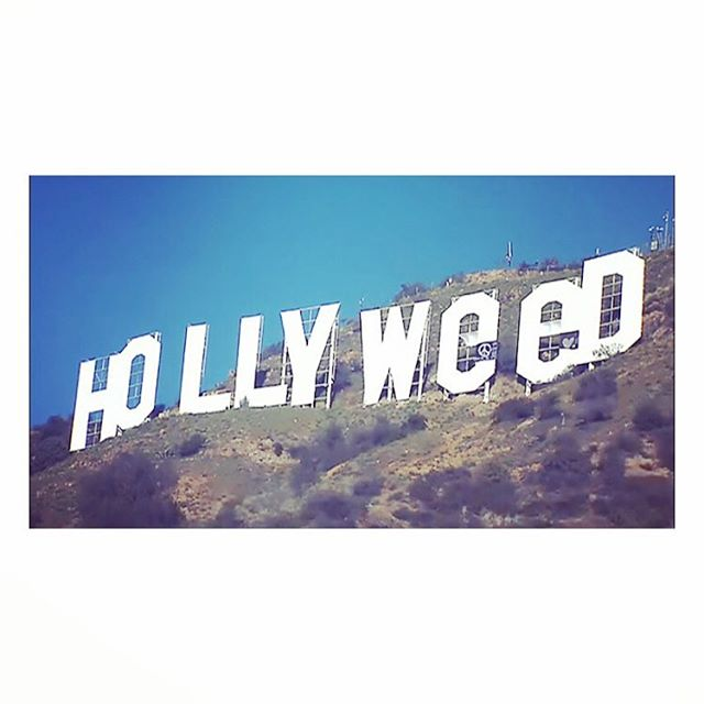 "In 2017, Hollywood has become ""Hollyweed."" - The New York Times"