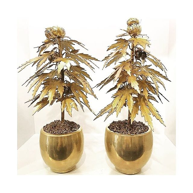 Vintage potted plants. #highend #ogkush