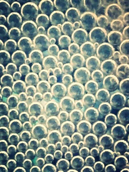 Photograph: Melody Sherwood - beta fish bubble nest