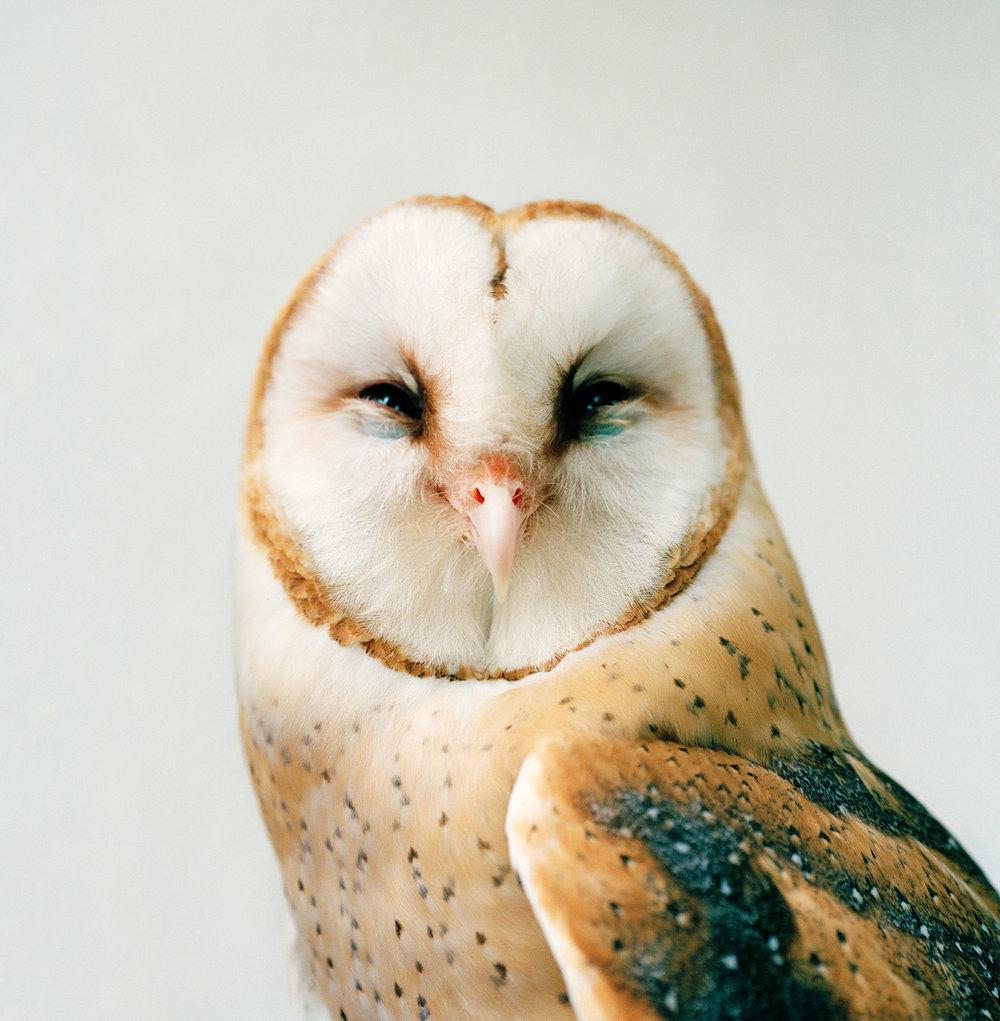 Owl_Face27.jpg