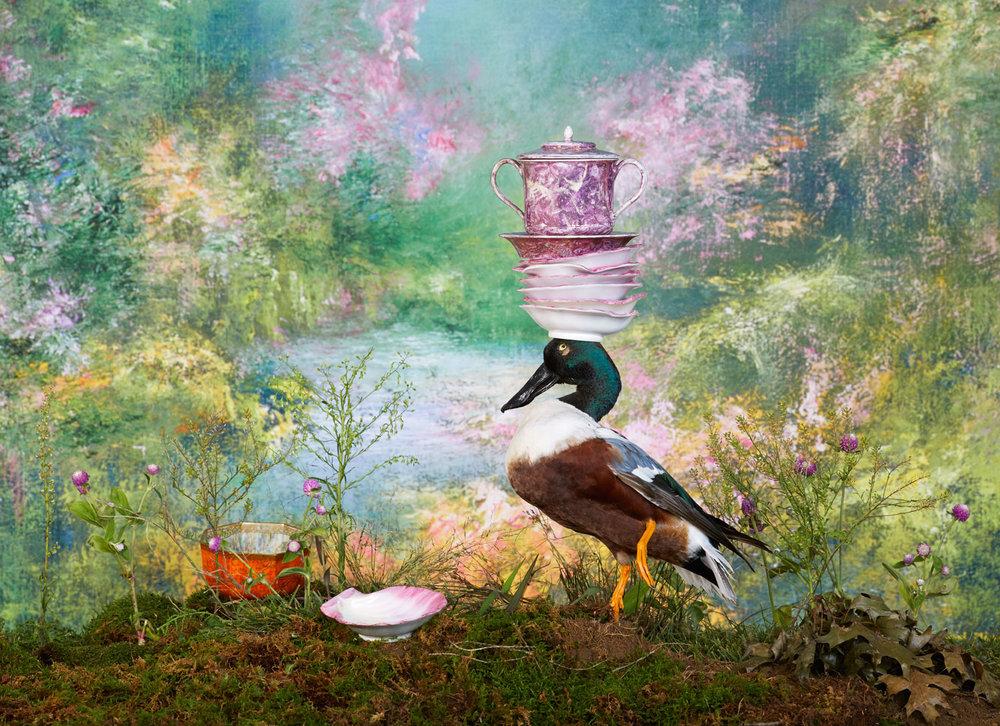 duck2_wedgwood_029.jpg