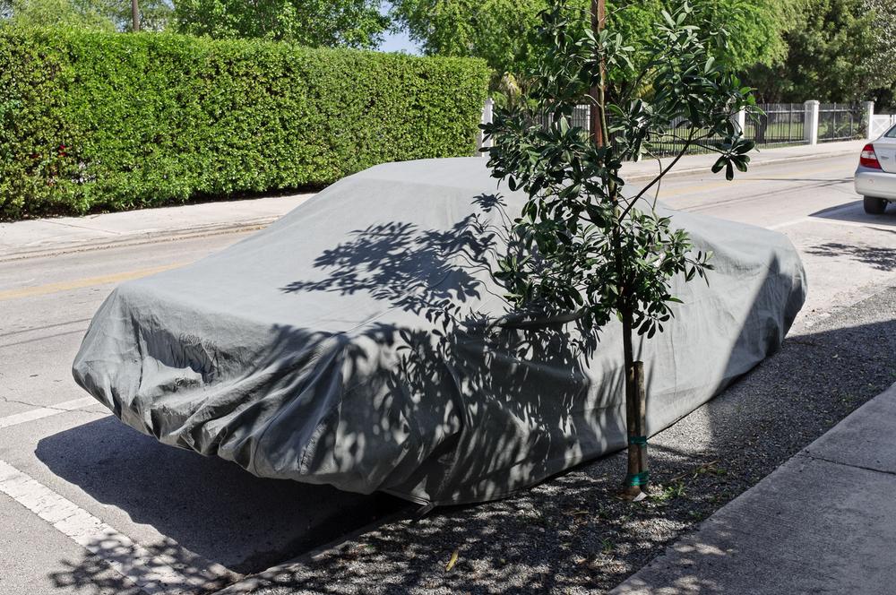 Covered Cars-6.jpg