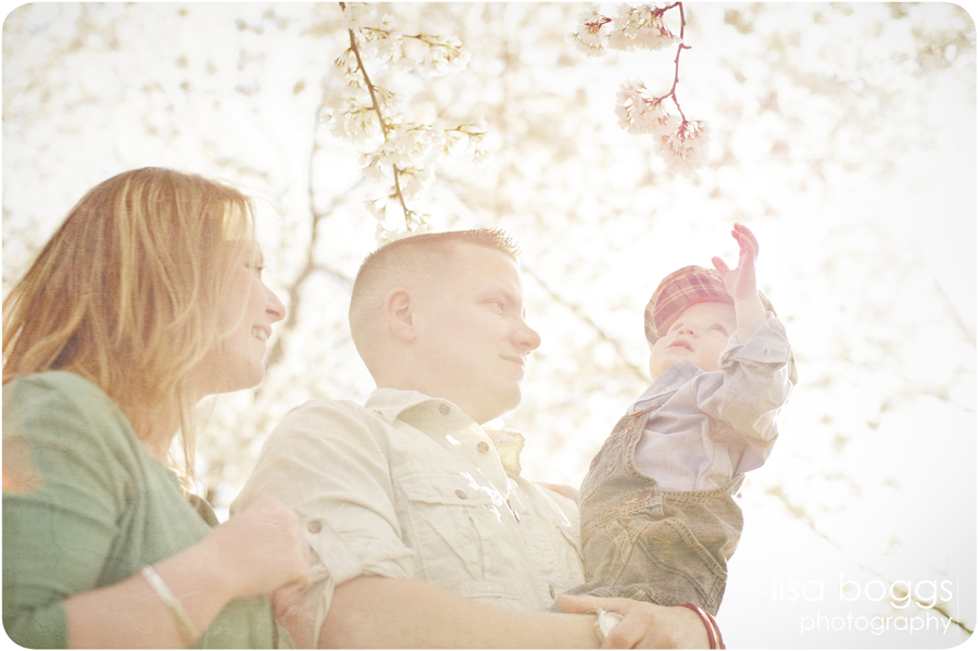 jipsons_family_dc_cherry_blossoms_photography_02.jpg