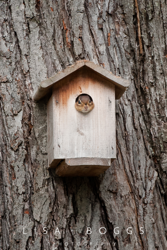 va_chipmunk_birdhouse
