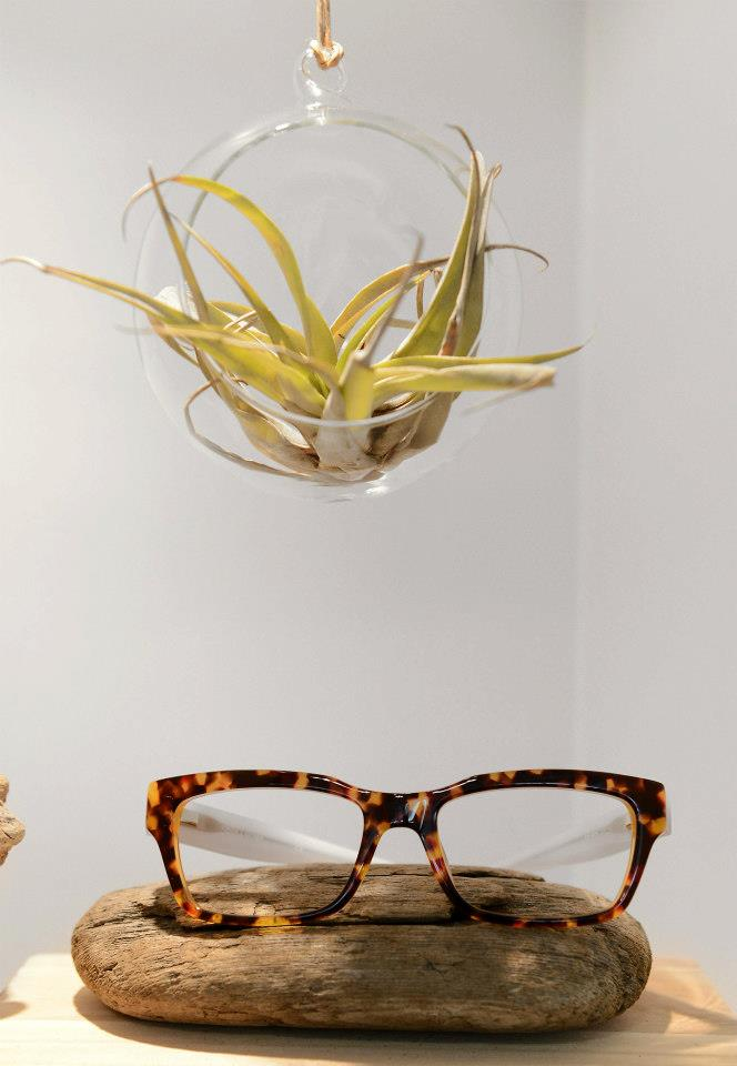San Antonio Eyeworks Glasses Display