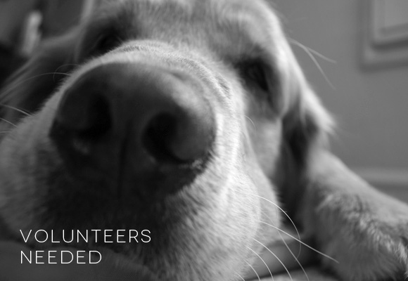 Dog-related volunteer opporunities | March 2012