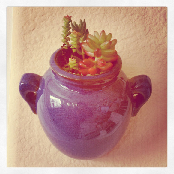 Mini Potted Wall Succulent