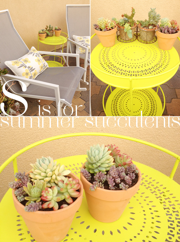 s is for Summer Succulents