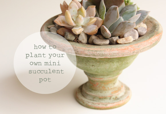 How to Plant your Own Mini Succulent Pot