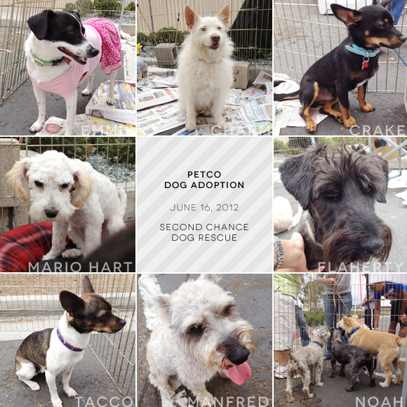 San Diego adoptable dogs