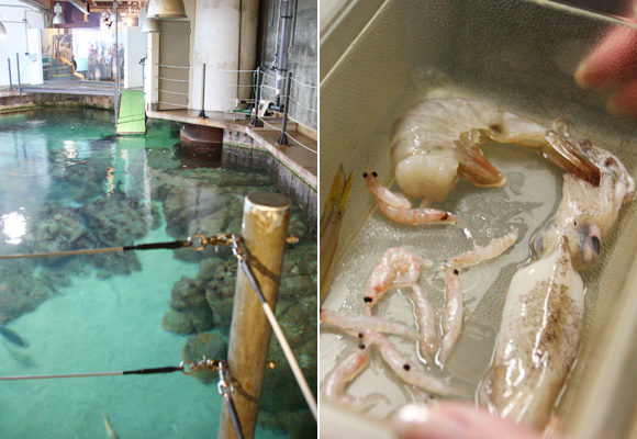 Monterey Bay Aquarium | Behind the Scenes