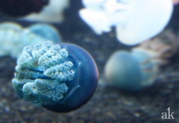 Monterey Bay Aquarium | Bumper Jellies
