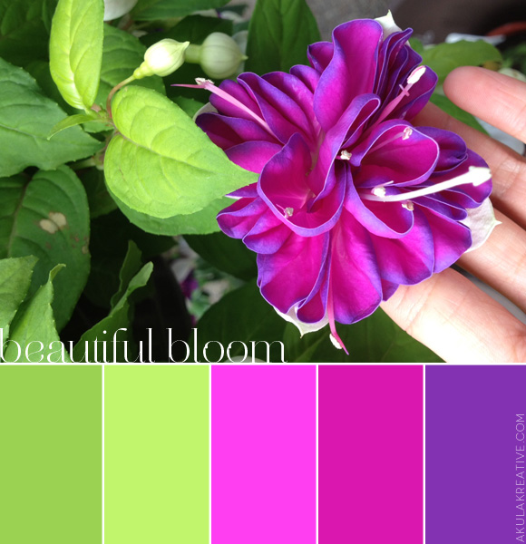 PInk, Purple, and Green Hanging Fuchsia Color Palette