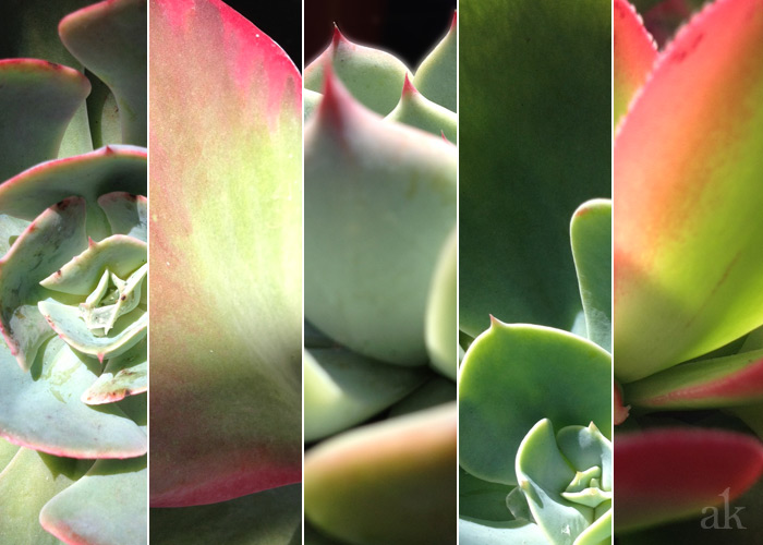 Succulents as per my iPhone