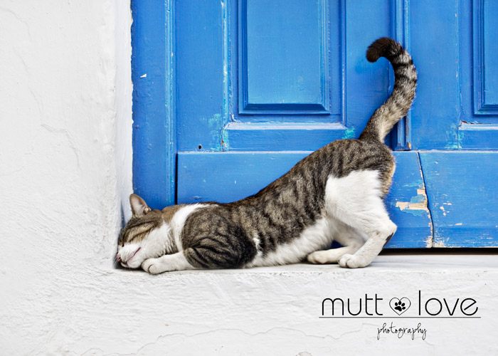 Mutt Love Photography