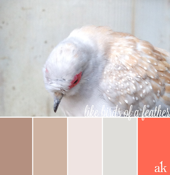 feather-inspired color palette | taupe, white, gray, coral