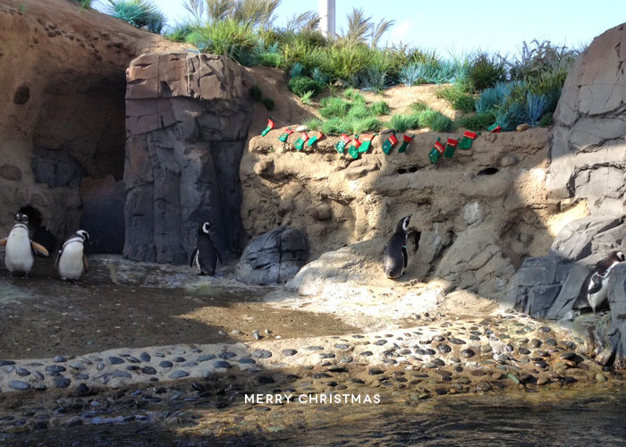 Christmas | Penguins at the Aquarium of the Pacific