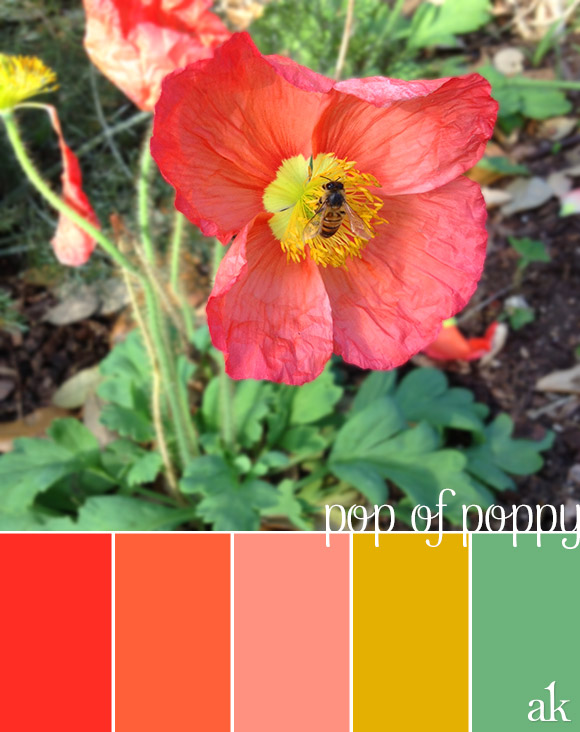 a poppy-inspired color palette .. red, poppy, pink, gold, mint