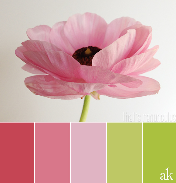 a ranunculus-inspired color palette // spring, pink, green
