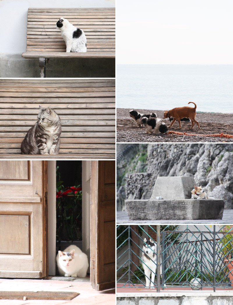 The Cats and Dogs of Italy // Akula Kreative